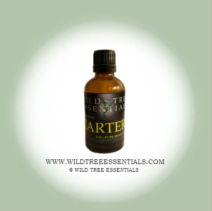 100% Pure Boswellia Carteri Frankincense Oil - Wild Tree Essentials
