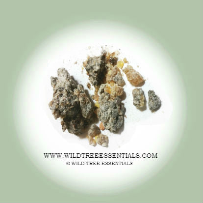 Boswellia Elongata Frankincense (VERY RARE!)  - Imported from the Island of Socotra. - Wild Tree Essentials