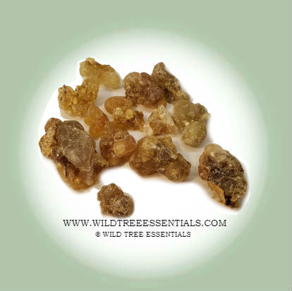 """Honey"" Hojari Frankincense (Boswellia Sacra) - Wild Tree Essentials"