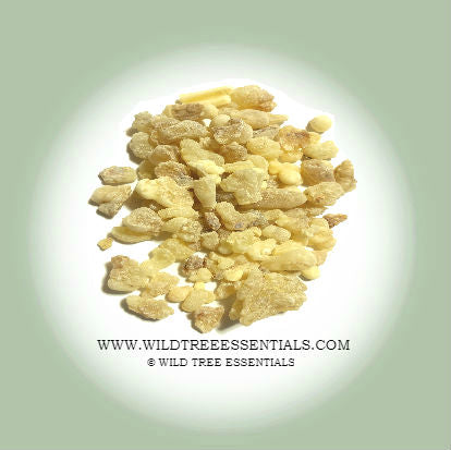 Omani Mixed Grade Boswellia Sacra Frankincense - Wild Tree Essentials