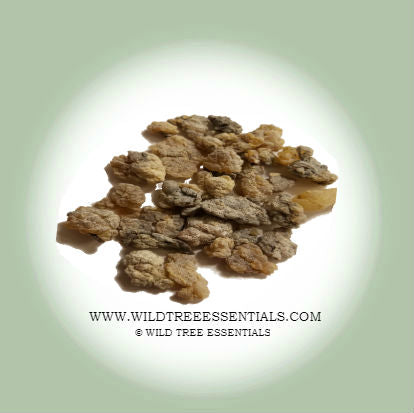 Salai Guggul (Boswellia Serrata) Frankincense - Wild Tree Essentials