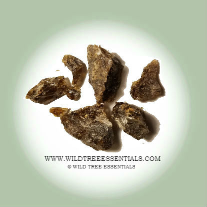 Boswellia Socotrana Frankincense (VERY RARE!)  - Imported from the Island of Socotra - Wild Tree Essentials