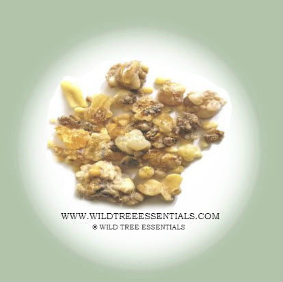 """Beyo"" Boswellia Carteri Frankincense - Wild Tree Essentials"