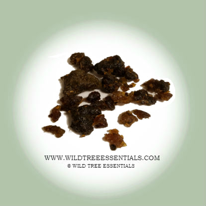 """Nagar"" Guggul (Commiphora wightii) Mukul Myrrh - Wild Tree Essentials"