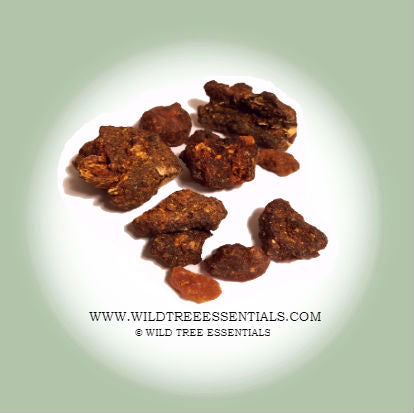 """Opopanax"" Commiphora Guidottii Sweet Myrrh - Wild Tree Essentials"