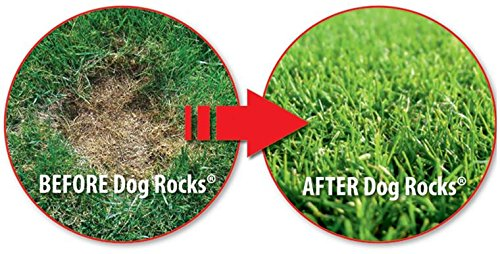 All Natural Grass Burn Solution for Dogs Prevents Lawn Urine Stains - 600 Gram Box (1 Pack)