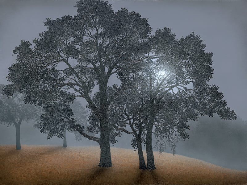 Veiled in Summer Mist - limited edition canvas prints
