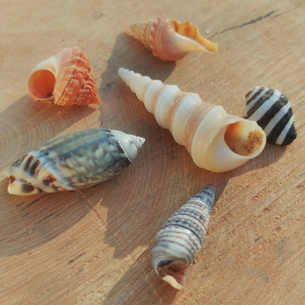 Mini-Seashell Mix