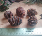 Fancy Dried Pine Cone