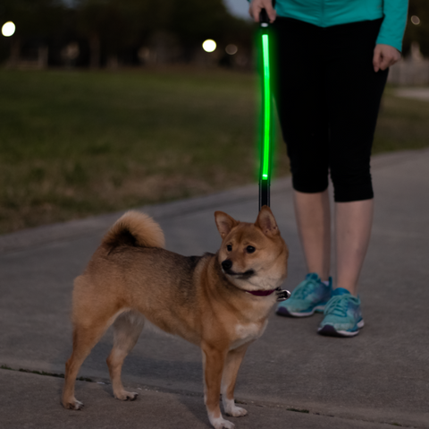 Light Up LED Leash-LittleLightLab