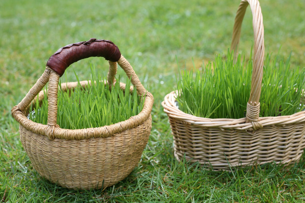 Grow your own Easter grass in baskets
