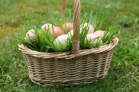 Real natural easter grass