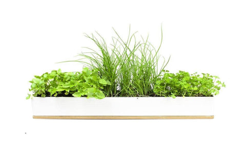 Urban Greens - Windowsill Grow Kit - Micro Herbs