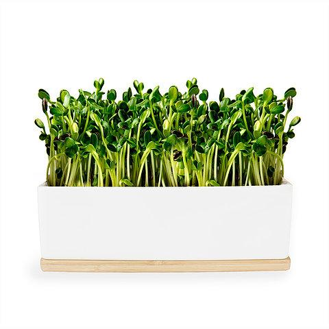 Urban Greens - Mini Garden Sprout Grow Kit - Sunflower