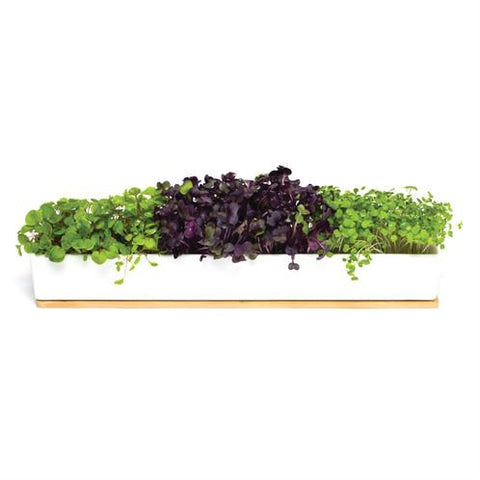 Urban Greens - Windowsill Grow Kit - Microgreens