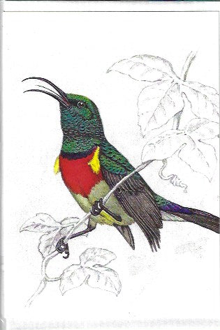 Greater Double Collared Sunbird small greeting card