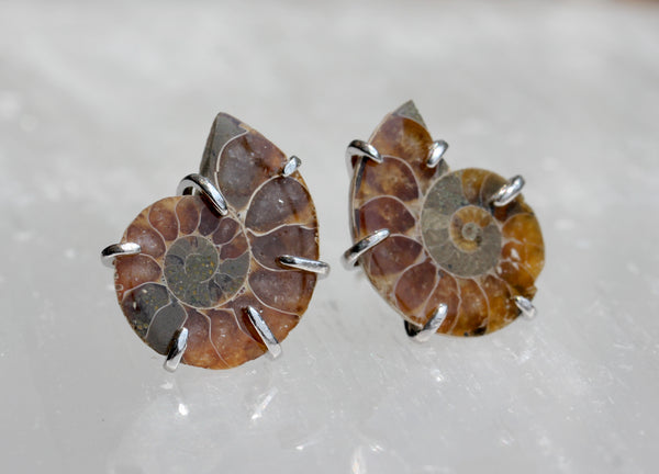 Ammonite Fossil Post Earrings