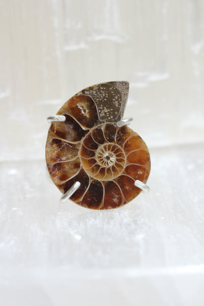 Ammonite Fossil Ring