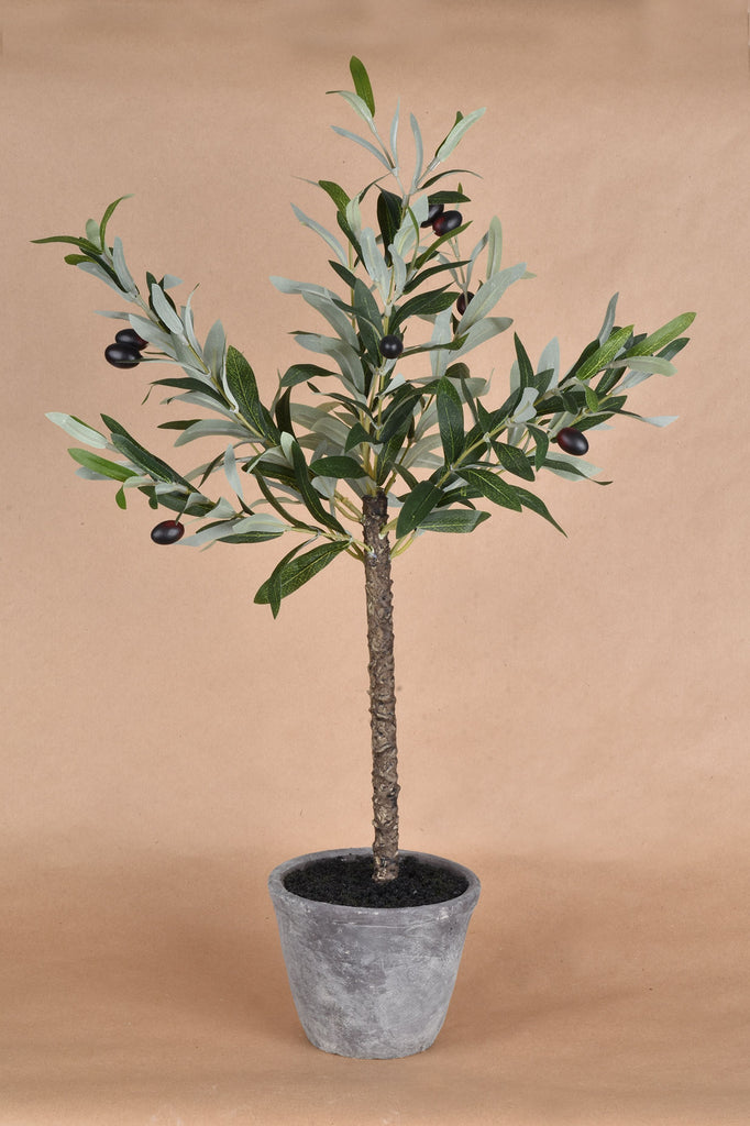 Olive Tree w/Gray Wash Pot