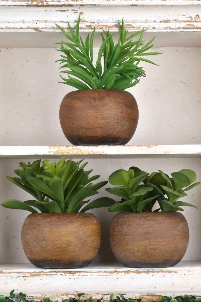 Set of 3 Lifelike Succulents in Round Pots