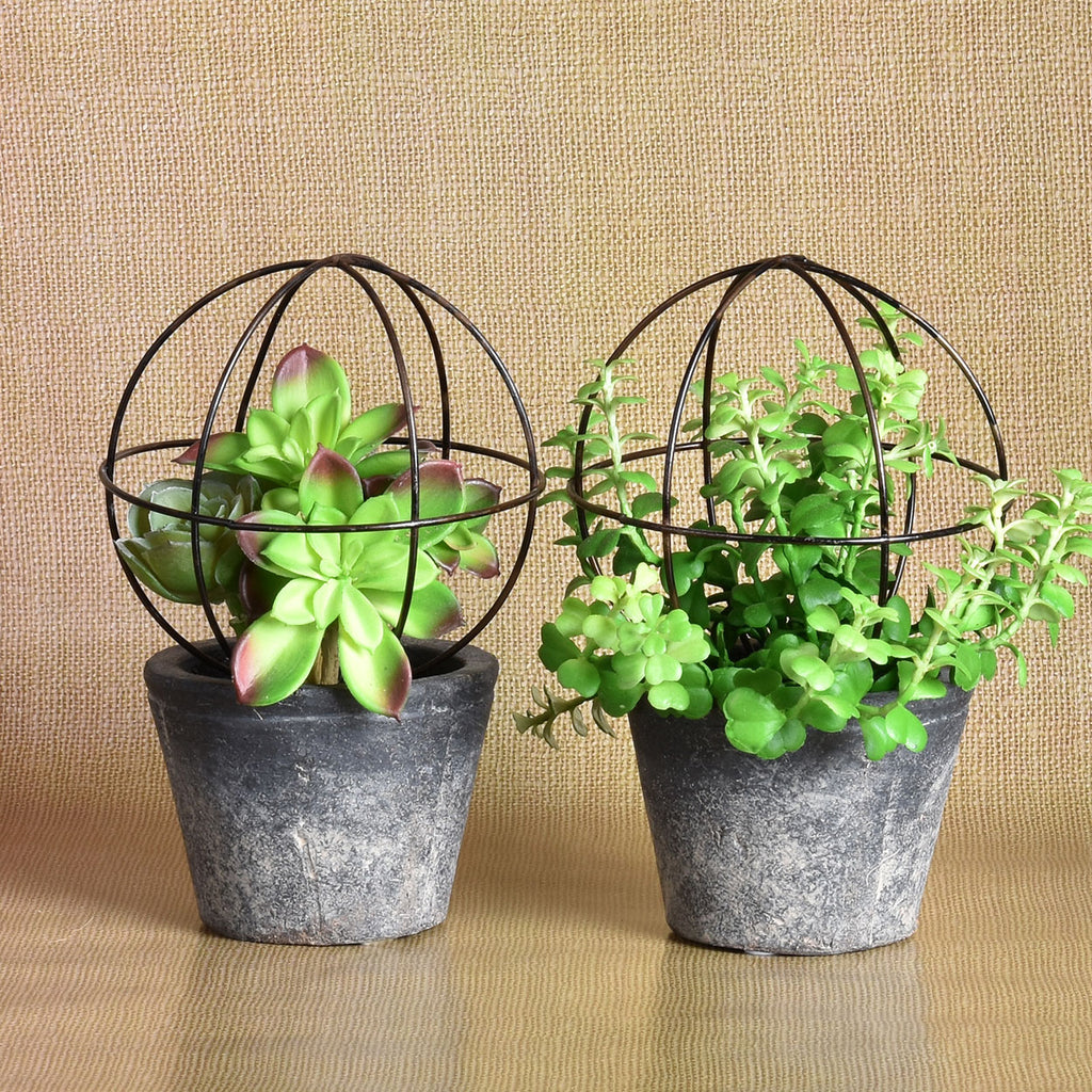 Set of 2 Succulents with Trellises