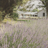 los poblanos lavender new mexico yoga retreat