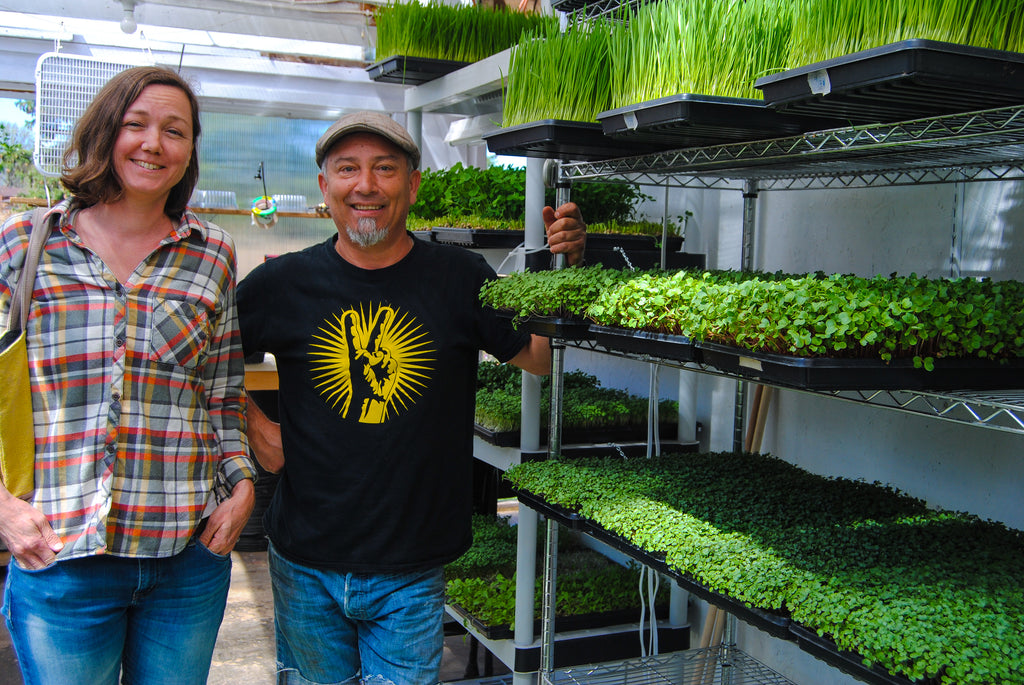 The City Harvest Brings Microgreens to the City