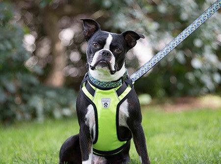 RC Pet Products Vest Harness