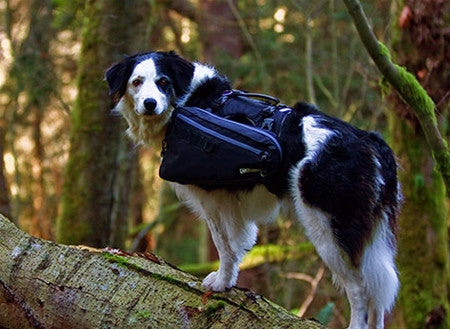 Ultimate Trail Pack