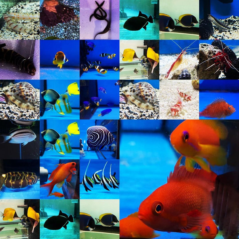 Marine Fish Available for Sale This Week (Updated 23 Oct 2020)