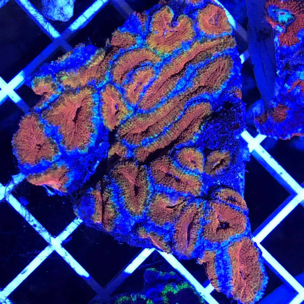 Colorful Corals this weekend @ FNM Retail Store!