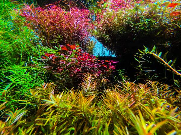 12 Best Aquarium Plants For Beginners