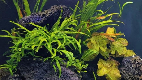 Starting a planted aquarium