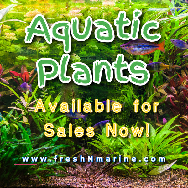 Aquatic Plants are back online for sale!