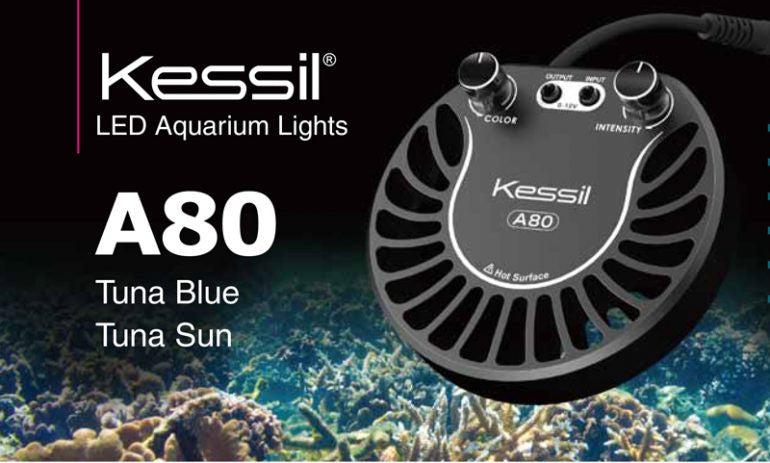 KESSIL A80 has finally landed in Singapore!