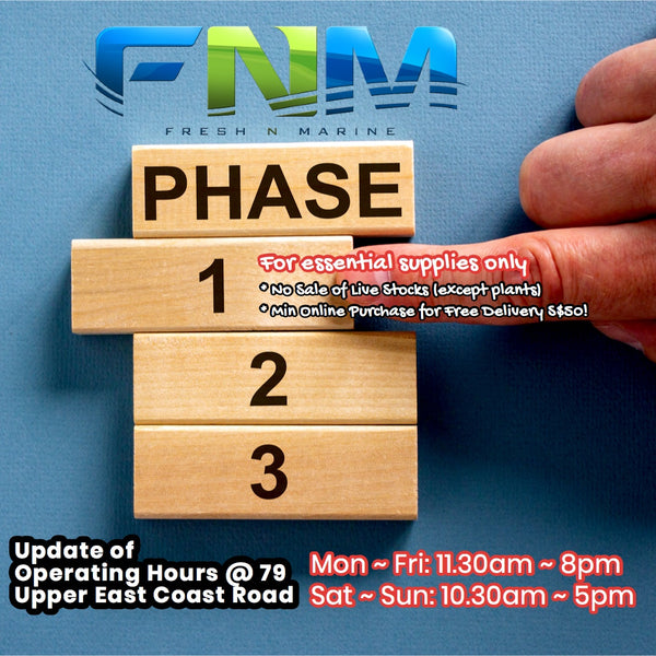 What's happening during Phase 1 at FNM?