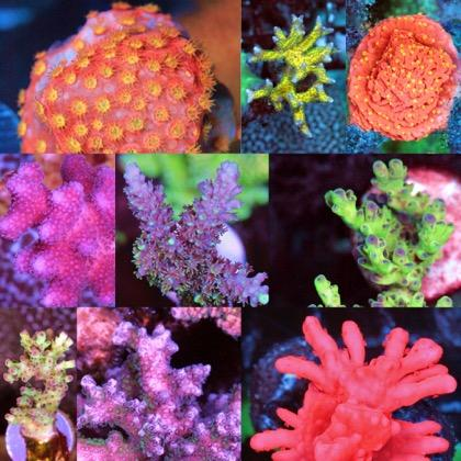 Corals Just Arrived!