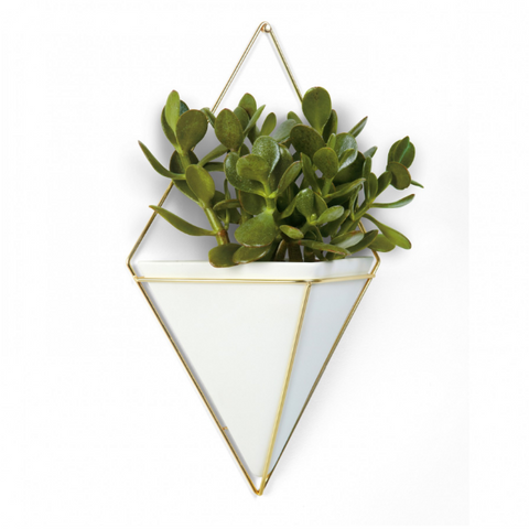 Trigg - Wall Vessel, Large, White/Brass