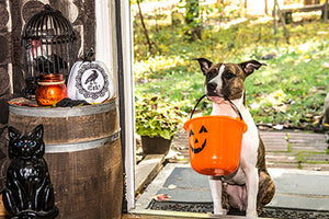 Keep Your Canine Companion Safe this Halloween