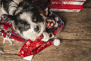 5 Ways to Keep Dogs Happy During the Holidays