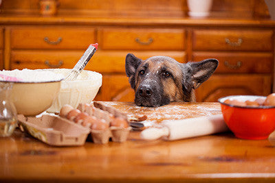 The Benefits of Cooking Meals for Your Dog