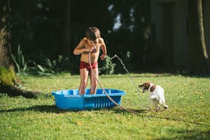 Tips to Keep Your Dog Safe During Heatwaves