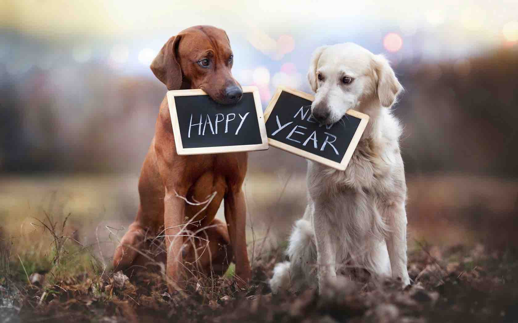 Image result for image, photo, picture, dog, happy new year