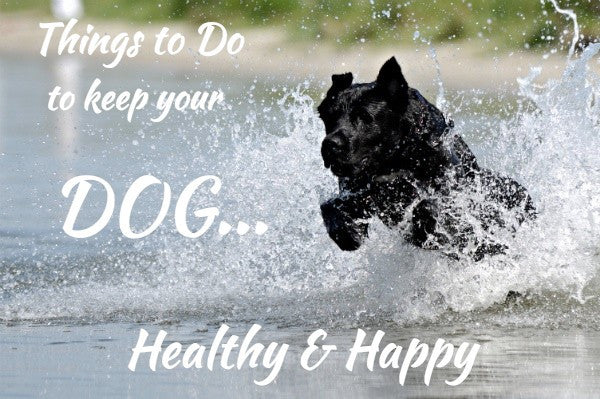 How to Keep Your Dog Healthy & Happy
