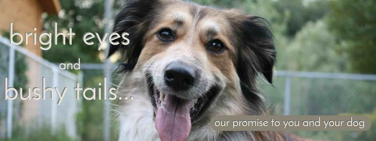 Our Promise to You and Your Dog