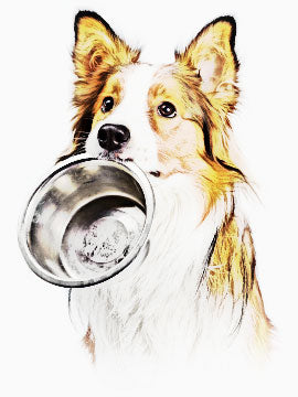 Healthy Whole Food For Dogs