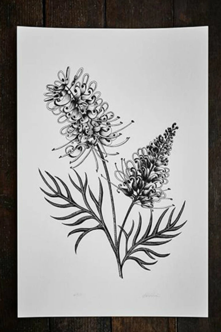 Illustration - Grevillea Limited Edition - Shop Online At Mookah - mookah.com.au