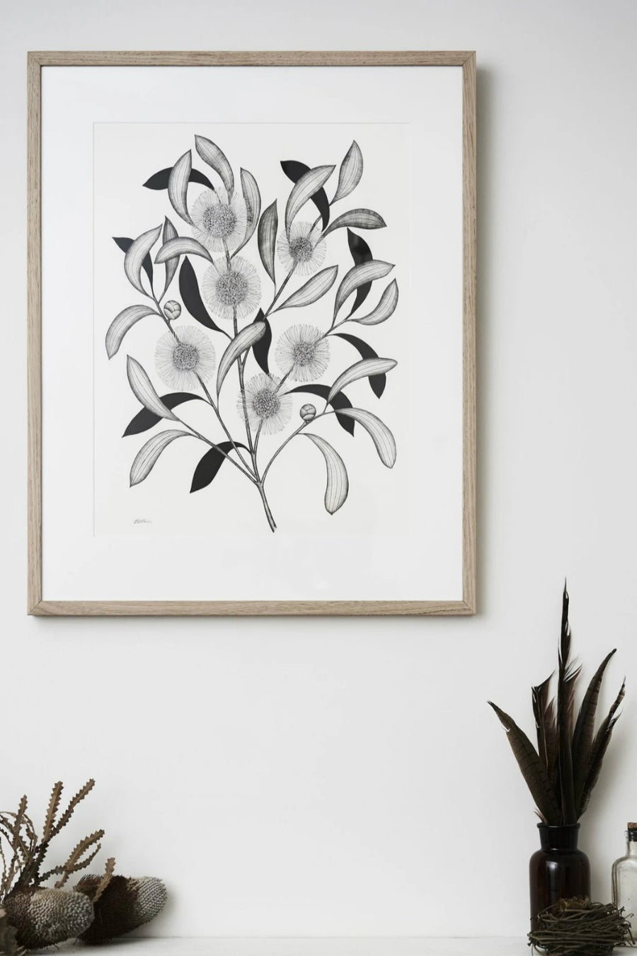 Illustration - Hakea Limited Edition - Shop Online At Mookah - mookah.com.au