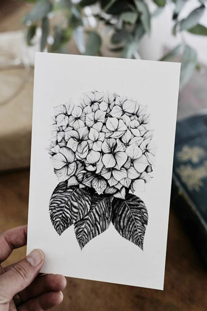 Illustration - Hydrangea Limited Edition - Shop Online At Mookah - mookah.com.au