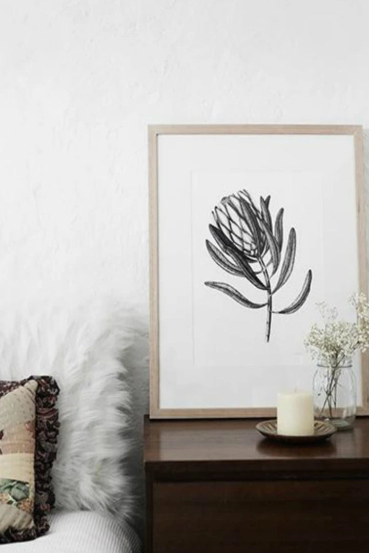 Illustration - Protea Limited Edition - Shop Online At Mookah - mookah.com.au